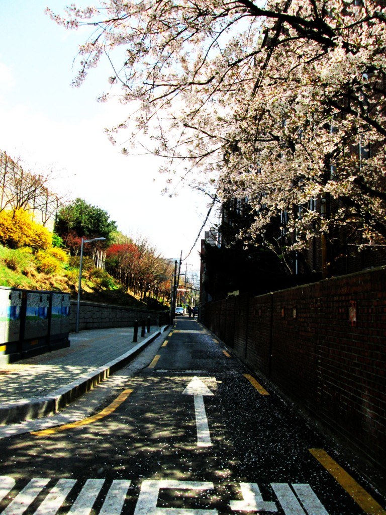 Who can resist such a natural beauty in the centre of Seoul - the noisiest city in the world?