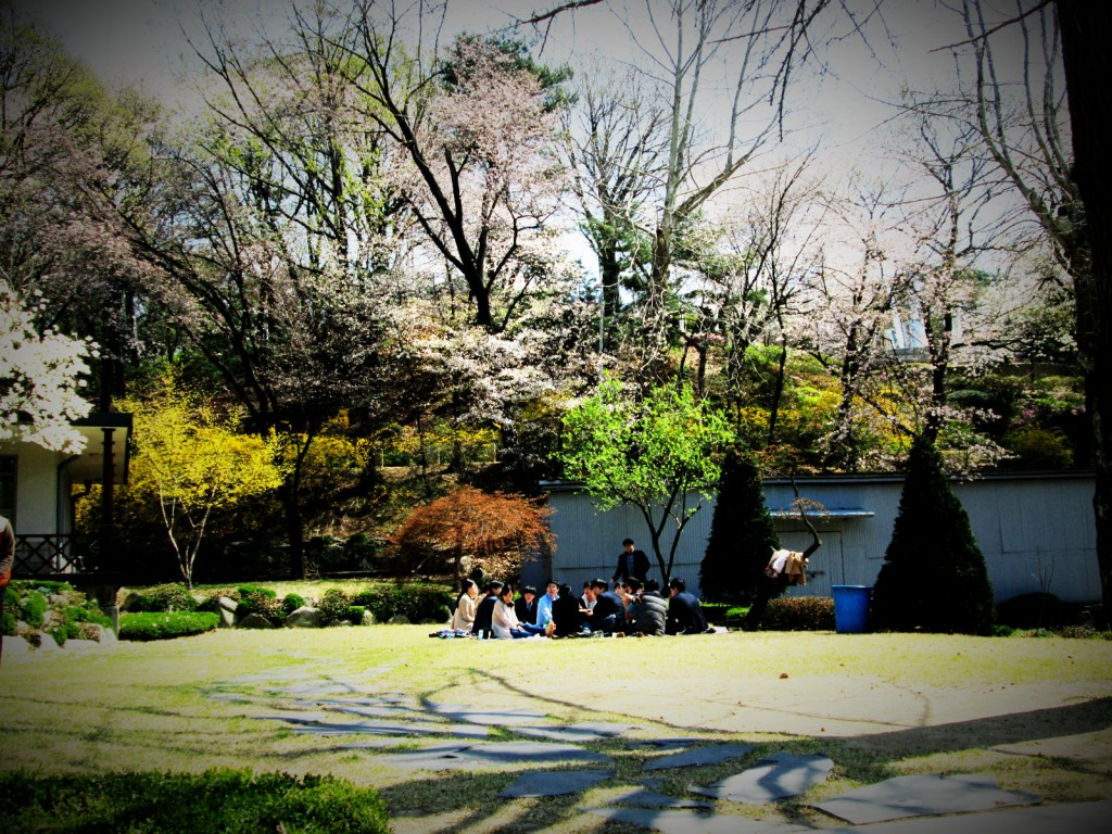 Outdoor classes are extremely appreciated and preferred over indoor traditional classes by Yonsei students.
