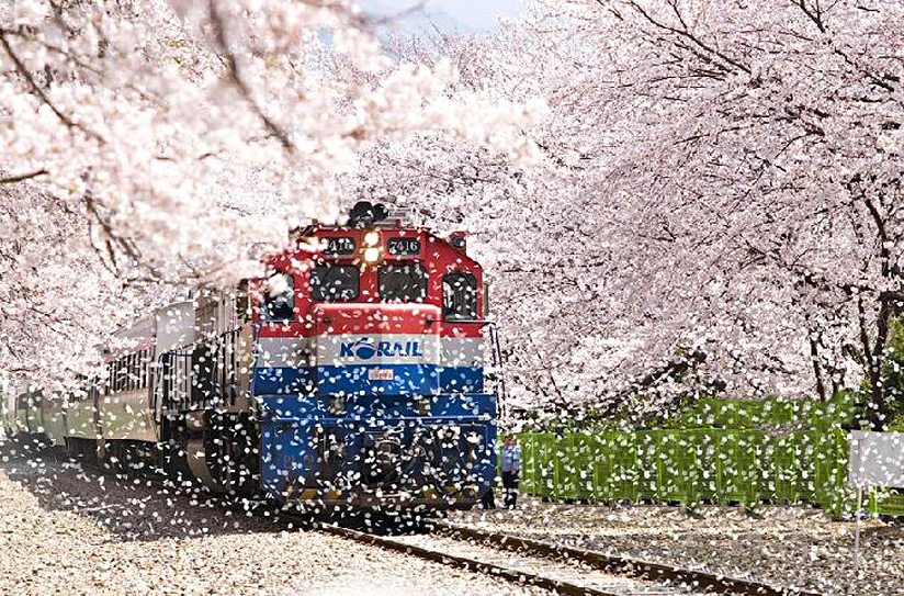 jinhae train